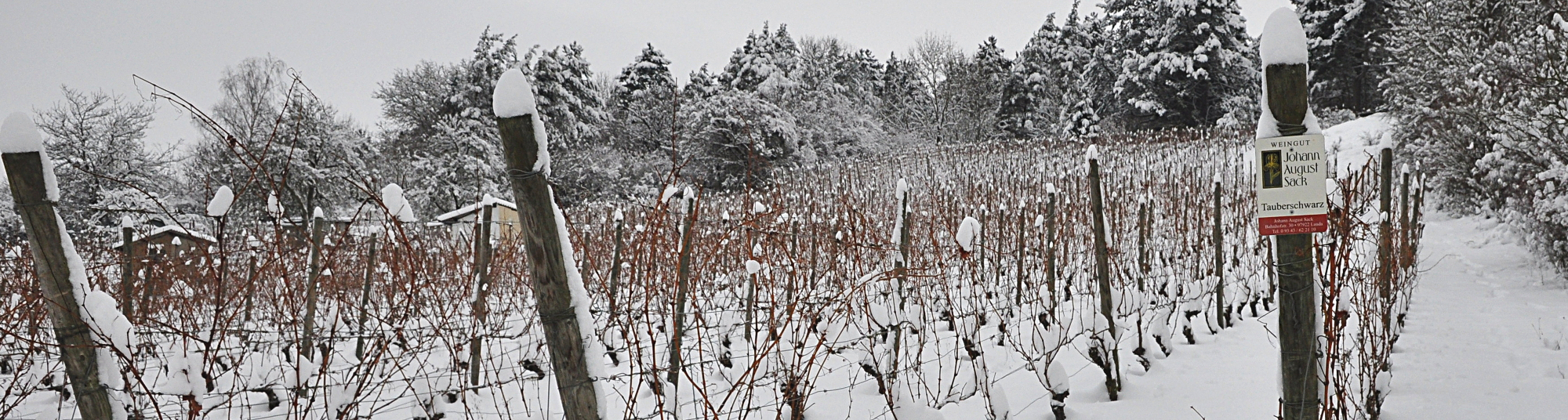 Weingut Johann August Sack - Winter 3