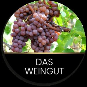 Das Weingut Johann August Sack